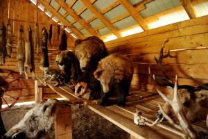 蒙古旅游图片 985