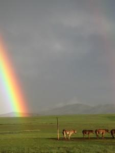 rainbow, baynbogd horse